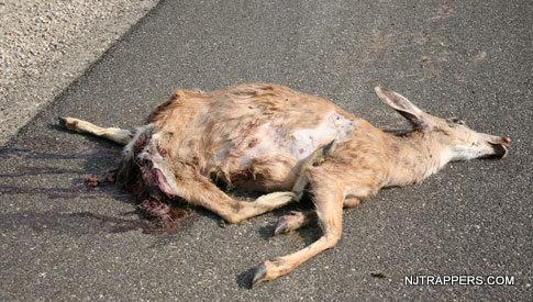 1-Dear Carcass