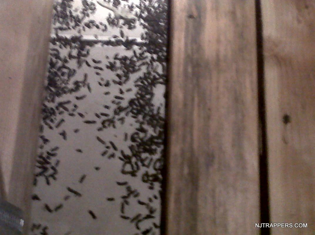 1-Bat Droppings