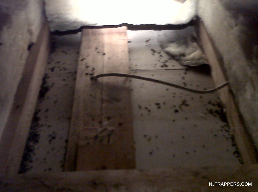 Nj Trappers 187 Attic Restoration Amp Animal Waste Cleanup